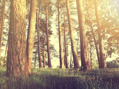 Nature in the forest at summer. Instagram vintage picture.